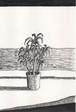 太久磨「自画像としての植物 ペン画4」