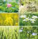 花と緑のポストカード2016(6枚セット)