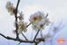 青葉の梅林~Plum grove~⑤