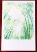 ポストカード【竹の木漏れ日】2枚セット 水彩画手描き