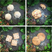 阿波小麦クッキー 8種類詰め合わせBOX