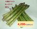北海道十勝産 アスパラ800g(L~2Lサイズ混)