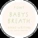 《フォントデータ》BabysBreath