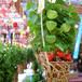ほおずき市 Hozuki Market Festival