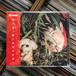 横沢俊一郎 / 絶対大丈夫 [新品CD]