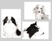 黒木リン【犬】