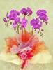 J0004) 胡蝶蘭 5本立ち Lサイズ ピンク