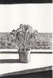 太久磨「自画像としての植物 ペン画1」