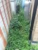 庭の草むしりが大変です。