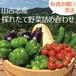 【本州&四国限定・送料無料】採れたて野菜詰め合わせBOX