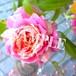 写真 薔薇『クロード・モネ』