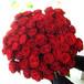 B011 Bouquet