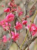【サンプル】梅は咲いたか【三味線文化譜】