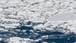 北海道写真素材:知床の流氷 (8)
