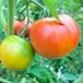 トマト(4kg箱) 2箱を1梱包