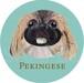 ペキニーズ/フォーン2《犬種名ステッカー/小型犬》
