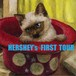 初のデモCD、HERSHEY's First Tour