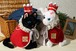 Noble cat/ノーブルキャット 王様衣装 王冠と王様マント付き 黒猫 白猫 ねこのもり