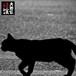 制作実績:大田区怪談「猫」