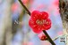 青葉の梅林2~Plum grove~⑧