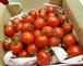 オスミックトマト ミニ ファイブスター 1KG 茶豆付き 送料込み