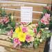 【送料無料】【開店祝い】【イベント・楽屋花】季節のお花のフラワーアレンジメント(生花) FL-AR-221