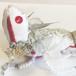 物語の宝石竜【白うさぎ 縞ハート】 〜不思議の国のアリスより〜