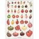 アート ポスター A4 サイズ KOUSTRUP & CO. - Tasty tomatoes 美味しいトマト
