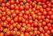 ミニトマト「サンチェリーピュア」3kg