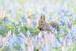 PORTRAIT EZO-RISU #1 木製額装