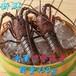 冷凍伊勢えび(2匹)総量約450g