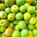 青梅(生梅)3㎏ 「梅シロップ・梅酒の作り方」同梱 ※無農薬・無肥料