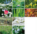 花と緑のポストカード2017(10枚セット)