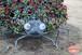 パンジーのテントウムシさん~Ladybug that was made with pansy~①