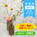 お花の定期便(年6回・隔月 日曜日お届けコース) ちびサイズ