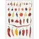 アート ポスター A4 サイズ KOUSTRUP & CO. - Chilies 唐辛子
