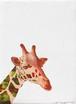 [絵画] animalor | キリン