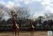 キリン親子のモニュメント~Kirin parent-child monuments~①