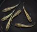 琥珀ラメ(強ラメ) 若魚(2020年産まれ) オス3 メス3 (現物出品) ikahoff N-0731-4253-a