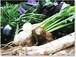 採りたての野菜を厳選して6品セレクト【5回分】