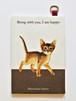 猫 パスケース アビシニアン イラスト B