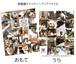 東京キャッツアイ クリアファイル チャリティー保護猫