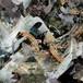 【予約開始】DJ.BLACKOLY - MELT (12inch+デジタルコード(アルバム未収録二曲付)