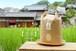 [玄米] 【金鵄米 2kg】きんしまい 29年産ヒノヒカリ