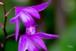 Flower-55