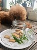 愛犬と一緒に食べられるクッキー