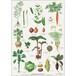 アート ポスター A2 サイズ KOUSTRUP & CO. - Kitchen garden 家庭菜園
