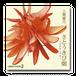 さとうきび畑ウチナーグチ:品番GUOK-001 CD