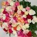 わけあり品 バラの花束Mix100本