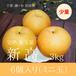 【ジューシーな大玉梨】新高ミニ玉 6個入り 3kg